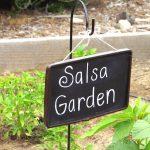 My Salsa Garden