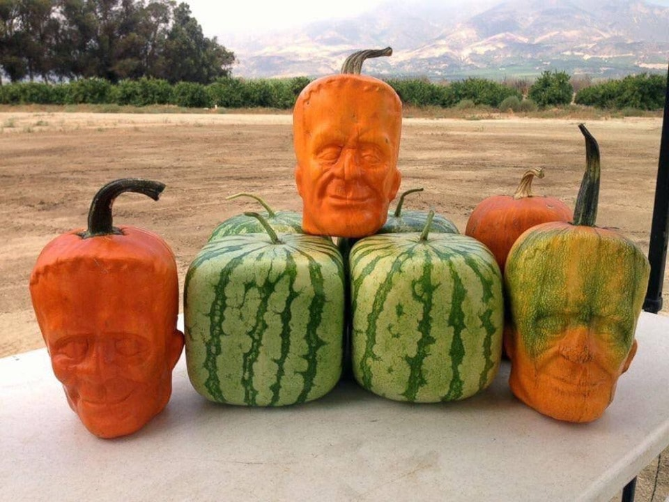 "Grow pumpkins so that they would grow into the face of Frankenstein's monster. known as ""Pumpkinsteins"""