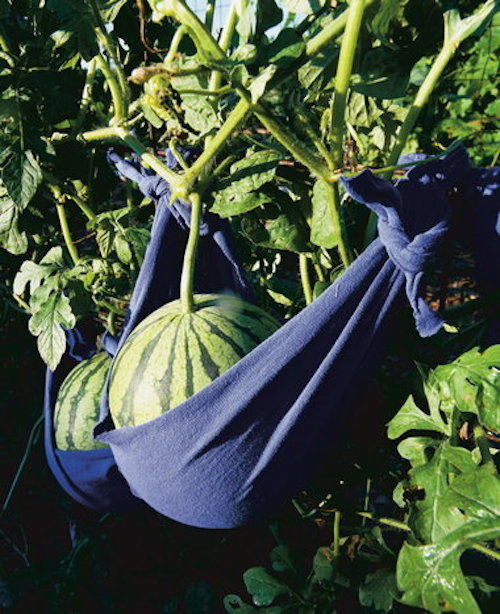 Support growing watermelons by making watermelon slings out of old t-shirts