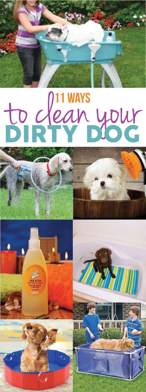 11 Dog Bath Ideas