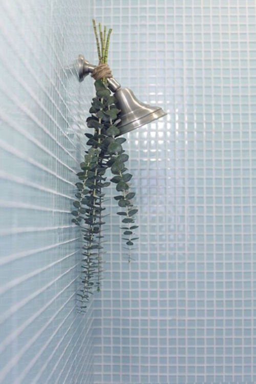 Tie a eucalyptus bunch to your shower head and let that smell relax you and turn your bathroom into a spa like oasis!