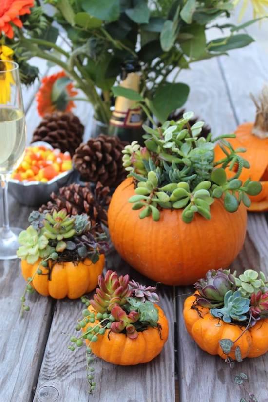 Create a Succulent Pumpkin Centerpiece the Easy Way!