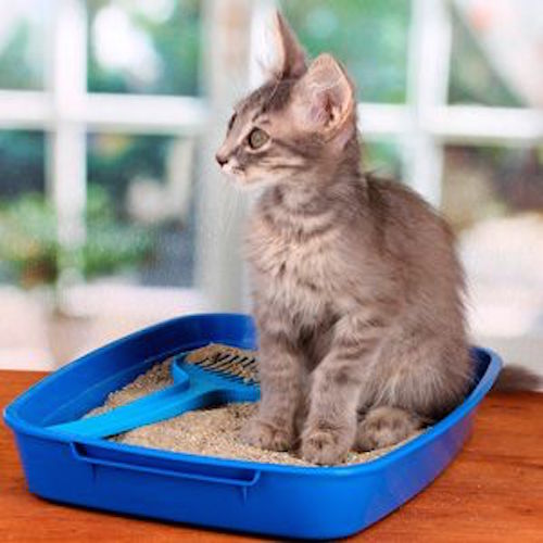 How To Get Rid Of Cat Litter Smell