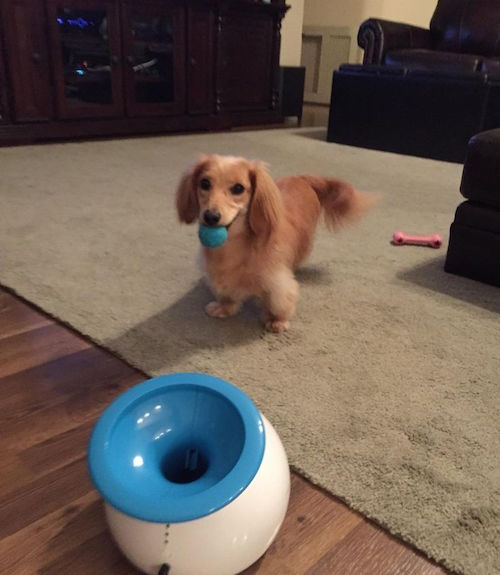 This is called iFetch and it's an interactive ball thrower for small dogs. Hah! Love this-