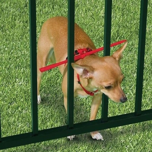 Consider this: dog escape prevention! I love this safe little thing for small dogs!