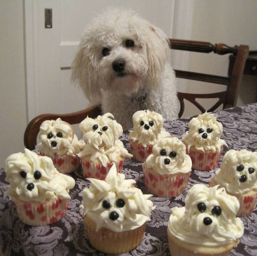 PUPcakes! So adorable! (source unknown)