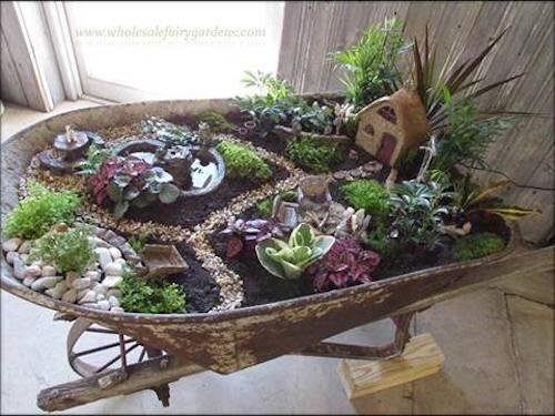 Wheelbarrow succulent garden