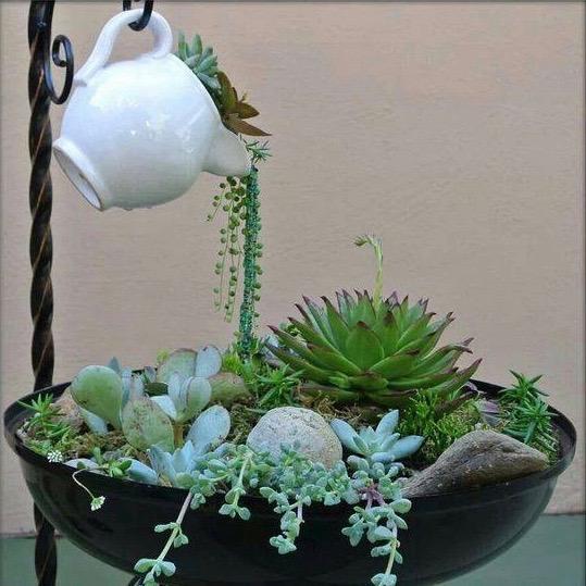 Teapot succulent garden