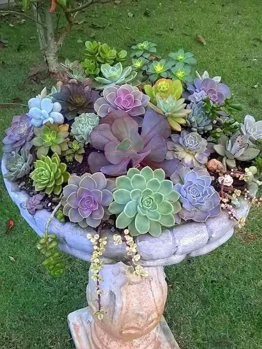 Bird Bath Succulent Garden