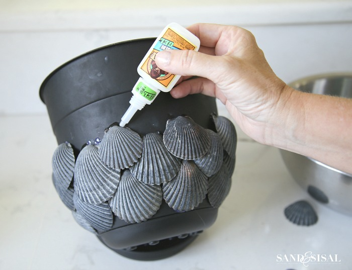 Black seashell planter