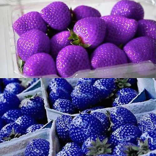 These are real! Blue and purple strawberries!
