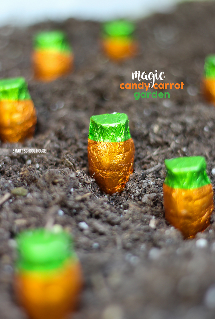 Chocolate carrot garden!