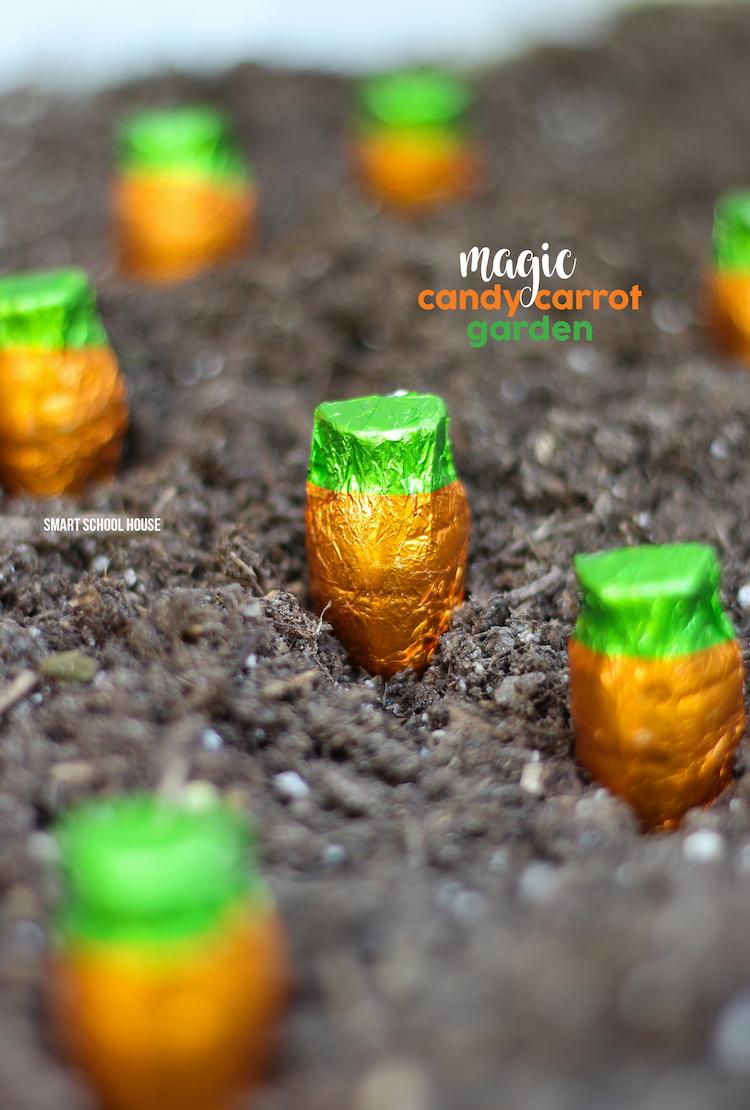Chocolate carrot garden