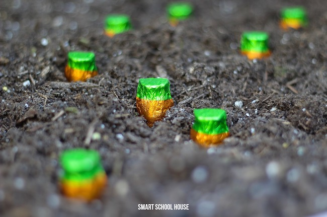 Grow a chocolate carrot garden with these candy seeds!