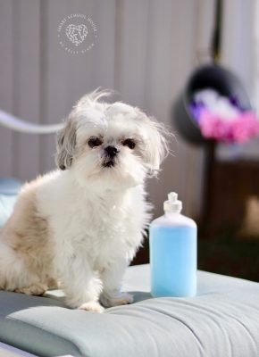 3 ingredient Homemade Dog Shampoo that kills fleas! Even if your dog doesn't have fleas, the ingredients will deodorize and remove all dirt and grime off of a dirty dog.
