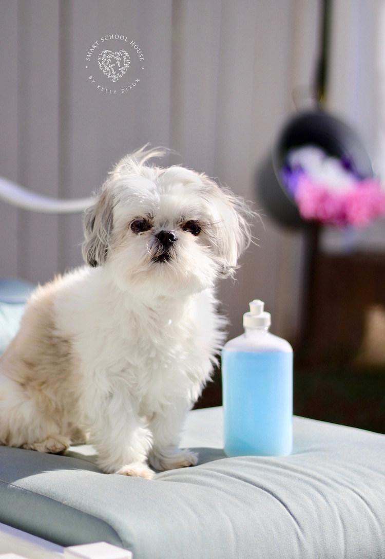 Dog Shampoo Recipe that KILLS FLEAS
