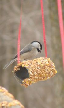 Toilet Paper Roll Bird Feeder