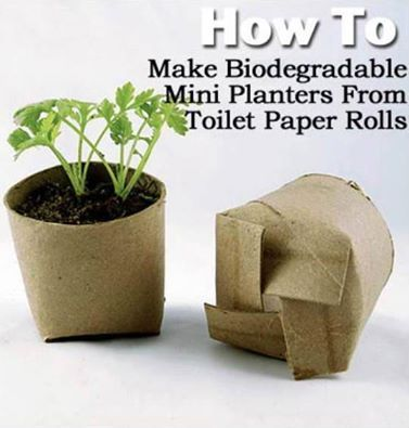 How To Make Biodegradable Mini Planters From Toilet Paper Rolls