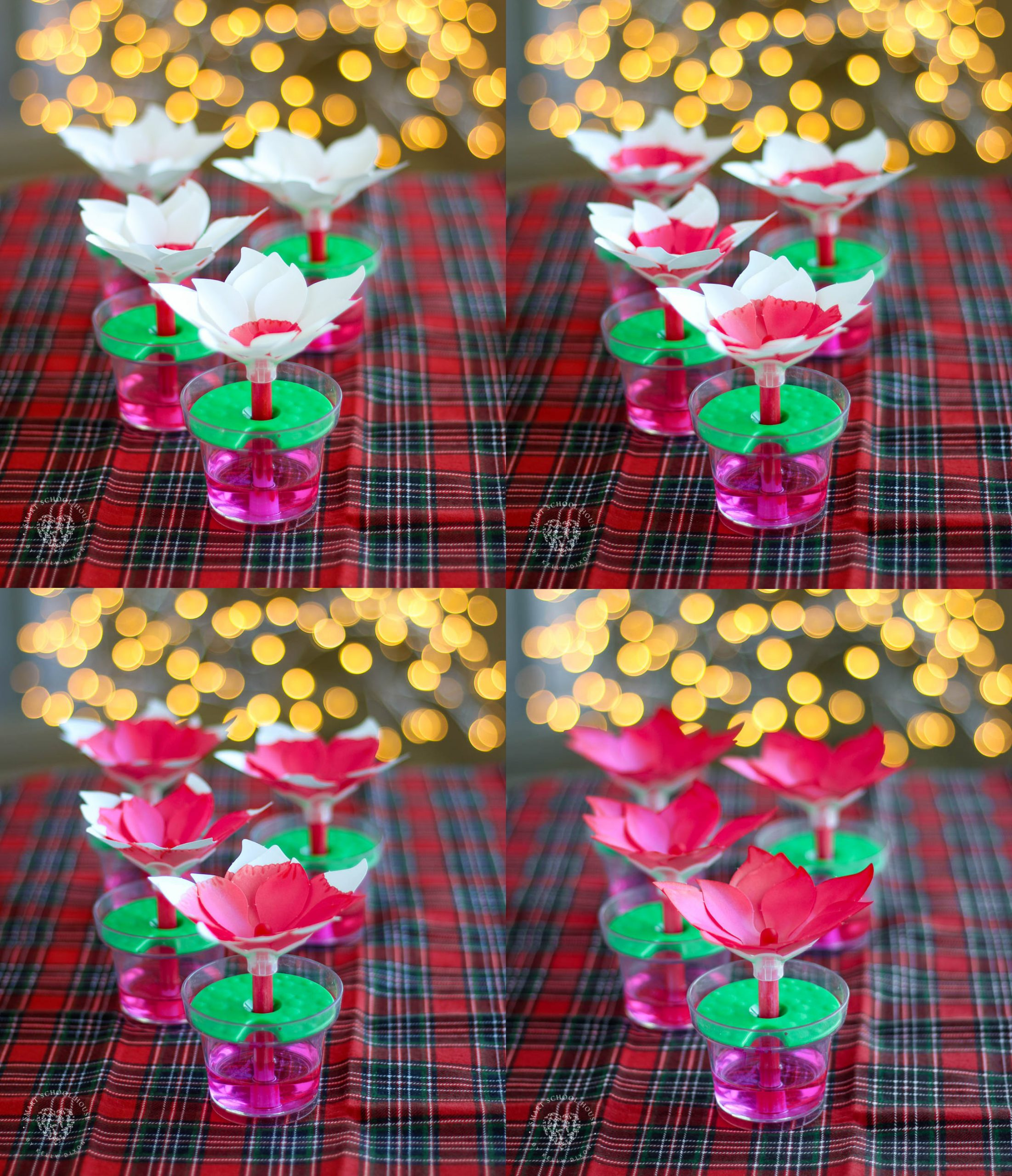 These Paper Poinsettias are more than a DIY Christmas craft, it's a science experiment for kids too!